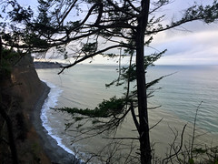 2017 YIP Day 364: Take it in (knoopie) Tags: 2017 december iphone picturemail 2017yip project365 365project 2017365 yiipday364 day364 tree sky clallam cozynewyear