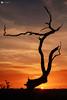 Last light (technodean2000) Tags: end day last light sunsunset sun sunset south wales uk tree colour nikon d610 lightroom sky