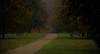 Dusk walkway.. (Coisroux) Tags: hydepark paths dusk nightscape atmospheric trees seasons serene calming darkness mist fog parklands d5500 nikond hss