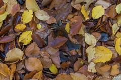 Kleurig tapijt (Marjon van der Vegt) Tags: natuur clingsebossen herfst paddenstoelen kleuren bladeren bomen wolken boerderij
