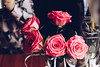 Day TwentySeven. (Alex Lukashevich) Tags: flowers roses morning home warmth beauty love life