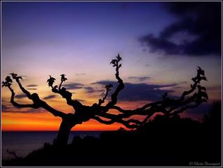 L'arbre photogénique