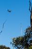 Work time ([S u m m i t] s c a p e) Tags: bluemountains leura nativeplants summer