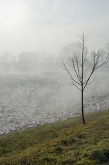 The Border of Weather (Vjekoslav1) Tags: mist magla sunce sun drvo tree colours boje snijeg snow croatia hrvatska podrute hrvatskozagorje mountain planina ivanšćica
