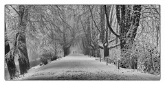 Kastanienallee Vers.II (efgepe) Tags: 2017 70mm dezember schnee bw schwarzweiss black silverefexpro lightroom kastanien allee kastanienallee sw baum bäume tree trees