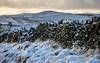 Snowy drystone wall (Keartona) Tags: rowarth lantern pike landscape countryside winter morning sunlight dawn drystone wall stonewall path footpath snow cold weather hayfield derbyshire peakdistrict england english hills
