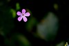 2017_077 (kgorka) Tags: gorkabarreras canon eos7d lowepro manfrotto sigma150f28apoexdgos mt055cxpro3 triopob4 triopo flor macro macrofotografia flower ucieda cantabria cantabriainfinita rinconesdecantabria