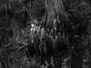 P1011633.jpg (Michael Bartosek) Tags: everglades 2017 michaelbartosekphotography epl3 olympus florida