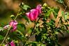 Flora y fauna de Shirakawa-go (juangou) Tags: nature green japan insect shirakawa go shirakawago naturaleza flower japón mura town mushi 虫 自然 緑 白川 岐阜 macrofotografía macro