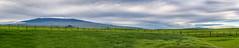 Mauna Kea and Mauna Loa Panorama (JUNEAU BISCUITS) Tags: maunakea maunakeasummit maunaloa panorama pano hawaii bigisland waimea kamuela landscape nikond810 nikon hawaiiphotographer pasture mountain