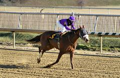 "2017-12-26 (32) r3 Elvis Trujillo on #6 Enterprise Value (JLeeFleenor) Tags: photos photography maryland md horse jockey جُوكِي ""赛马骑师"" jinete ""競馬騎手"" dżokej jocheu คนขี่ม้าแข่ง jóquei žokej kilparatsastaja rennreiter fantino ""경마 기수"" жокей jokey người horses thoroughbreds equine equestrian cheval cavalo cavallo cavall caballo pferd paard perd hevonen hest hestur cal kon konj beygir capall ceffyl cuddy yarraman faras alogo soos kuda uma pfeerd koin حصان кон 马 häst άλογο סוס घोड़ा 馬 koń лошадь laurelpark marylandraces races outdoors outside winter cold"