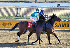 "2017-12-26 (31) r3 Christian Hiraldo on #1 My Sweet Autumn (JLeeFleenor) Tags: photos photography maryland md horse jockey جُوكِي ""赛马骑师"" jinete ""競馬騎手"" dżokej jocheu คนขี่ม้าแข่ง jóquei žokej kilparatsastaja rennreiter fantino ""경마 기수"" жокей jokey người horses thoroughbreds equine equestrian cheval cavalo cavallo cavall caballo pferd paard perd hevonen hest hestur cal kon konj beygir capall ceffyl cuddy yarraman faras alogo soos kuda uma pfeerd koin حصان кон 马 häst άλογο סוס घोड़ा 馬 koń лошадь laurelpark marylandraces races outdoors outside winter cold bay"