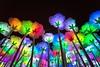 _DSC1894 (samuel.w photography) Tags: macau light flower night