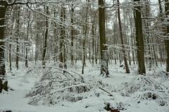 DSC_2442 Eine traumhafte Winteratmosphäre - A magical winter atmosphere (baerli08ww) Tags: deutschland germany rheinlandpfalz rhinelandpalatinate westerwald westerforest wald forest winter schnee snow