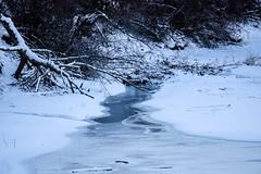 Frozen [Explored] (Jessie T*) Tags: mcarthurisland kamloopsbc canada snow tree landscape water ice winter