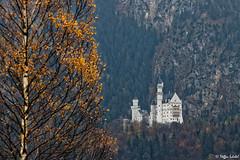 Neuschwanstein Castle / Schloss Neuschwanstein (Steffen Schobel) Tags: neuschwanstein castle schloss füssen ludwigii bayern architektur architecture schwansee tourismus sightseeing sehenswürdigkeit herbst autumn birke birch