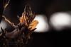 Light Leafs (Thomas TRENZ) Tags: austria nikon sonnenlicht tamron thomastrenz vienna blã¤tter braun brown d600 fotografie fx iamnikon leads macro makro natur nature orange photography sunlight wien ã¶sterreich