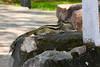 Squirrel ... The Qutub Minar. New Delhi, India. (RViana) Tags: india southasia भारत 印度 インド inde indien индия novadelhi dheli neudelhi नईदिल्ली 新德里 ニューデリー ньюдели esquilo squirrel