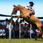 La Gateada Estrella thumbnail