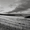 In a Field, Washington (austin granger) Tags: field washington palouse clouds crop farm farming winter fallow disked land topography rows diagonal square film gf670