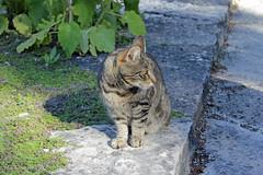 Cat in Visby (JKatajala) Tags: cat visby