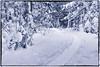 2018-01-02 2/365 Hiawatha Highlands Snowshoe Trail (Rick McCutcheon) Tags: 365the2018edition 3652018 day2365 02jan18 100xthe2018edition 100x2018 image2100 snowshoes d750 nikon tamron 2470g2 saultstemarie ontario silverefexpro2