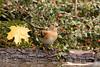 321A6659 (Dennunzio roberto) Tags: canonef100400mmf4556lisusm|| canon7dmark|| wildlife birdwatching bergamo bagnetti capanno orobie parcodelleorobiebergamasche