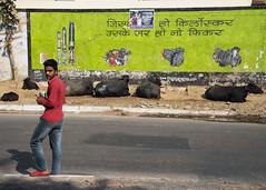looking at me? (Blinkofanaye) Tags: street delhi india yellow red man candid buffalo cattle kirloskar urban industry engines shock absorber advertisment