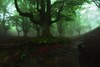 Creepy forest (Hector Prada) Tags: bosque niebla rio arbol bruma hojas hayedo atmósfera encantado magico misterioso forest fog mist leaves tree enchanted charmed mood river otzarreta paísvasco basquecountry roots raices musgo