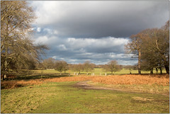 Clouds Rolling In (Mabacam) Tags: 2018 london richmonduponthames richmond richmondpark park openspace trees clouds outdoor landscape nature winter