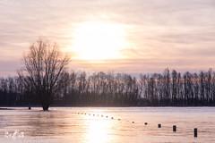 Flooded fields (Renate van den Boom) Tags: 01januari 2018 bemmelsewaard boom europa gelderland jaar landschap maand natuur nederland renatevandenboom rivier uiterwaarden