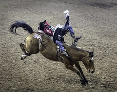 0246937383-95-Cowboy Bareback Riding at the 2017 National Finals Rodeo-1 (Jim There's things half in shadow and in light) Tags: 2017 america american lasvegas nfr nationalfinals nevada rodeo southwest thomasandmack usa unitedstates action animal cowboy december sports western barebackriding horse