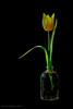 Geel - Jaune - Yellow (Jan Bogers) Tags: janbogers d800 105 geel yellow jaune chaleur tulp tulipe tulip bloem fleur flower