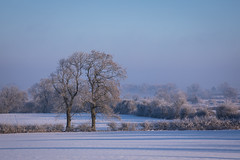 Trees and Snow (Helmuth of Boskone) Tags: snow crackshill crick winter trees field hedge blue sunrise frost ice england unitedkingdom gb northamptonshire