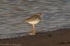 Redshank (Dougie Edmond) Tags: bird wader nature wildlife estuary pow burn