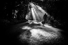out on a walk (Hendrik Lohmann) Tags: street streetphotography light dogs dog people forrest morning fog nikon hendriklohmann düsseldorf
