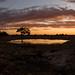IMG_7755-Panorama