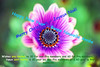 Nowdays there's a quota on wishes too! (Pensive glance) Tags: flower fleur plant plante