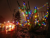 How Lovely are Your...Spines? (RZ68) Tags: christmas cactus lights holidays tree spines hanging street wet rain big tall night lg g6 merry happy