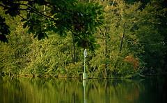 (Angela Schlafmütze) Tags: paesaggio landscape landschaft brandenburg pflanzen piante primavera frühling lago see ufer