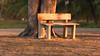 Banco ao sol (Carlos A. Nascimento) Tags: banco arvore parque sementeira aracaju sombra bench shadows