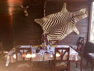 Zimbabwe Cape Buffalo Hunt 45