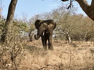Zimbabwe Cape Buffalo Hunt 3