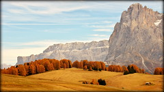A thin red line (Dolomites, Italy) (armxesde) Tags: pentax ricoh k3 italien italy südtirol altoadige herbst autumn fall berg mountain alps alpen dolomiten dolomites tree baum sellagruppe grupposella sassolungo langkofel