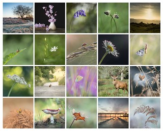 Favourites of 2017 - a big thank you to my Flickr friends for all your encouragement!