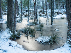 362-2017-365 Winter wonderland (Explored) (graber.shirley) Tags: scotland
