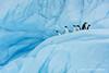 Happy 2018! (Marsel van Oosten) Tags: marselvanoosten squiver antarctica ice cold glacier penguins adelie birds avian wild animals fauna wilderness exploring ecotourism globalwarming climatechange phototour workshop photosafari adventure pristine blue