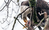 803_1958.jpg (Hegi68) Tags: baldeagle hungry weiskopfseeadler yukoncanadahainesjunctionhainesusa