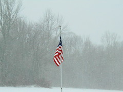 Blizzard at Scotland (jjbers) Tags: scotland connecticut usa flag blizzard snow storm windy january 4 2018 winter forest trees