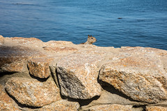 2017-AugSep-California-211 (4x4Foto) Tags: california loverspoint montereybay pacificgrove pacificocean aquarium beautiful beauty centralcoast cypress flowers nature plants redwoods rocks seagulls seals seaside sunset trees villages water virginia unitedstates